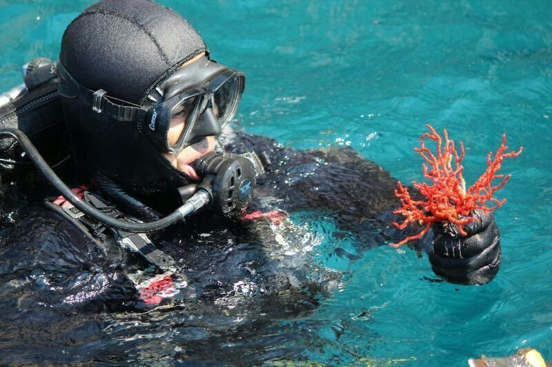 Adriatic red coral diver Dubrovnik