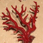 Dubrovnik Corallium rubrum polished branch